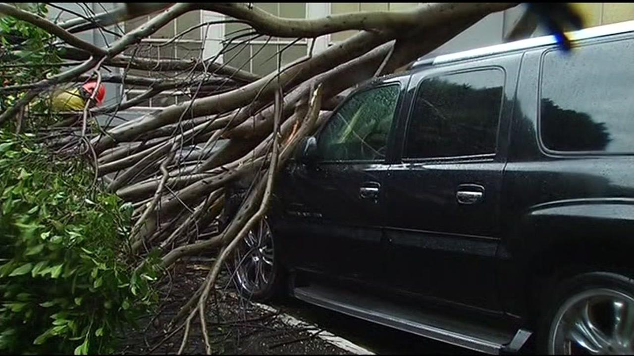 A storm is believed to be responsible for bringing down this huge tree that fell on three cars in San Francisco on Wednesday, January 6, 2016.KGO-TV