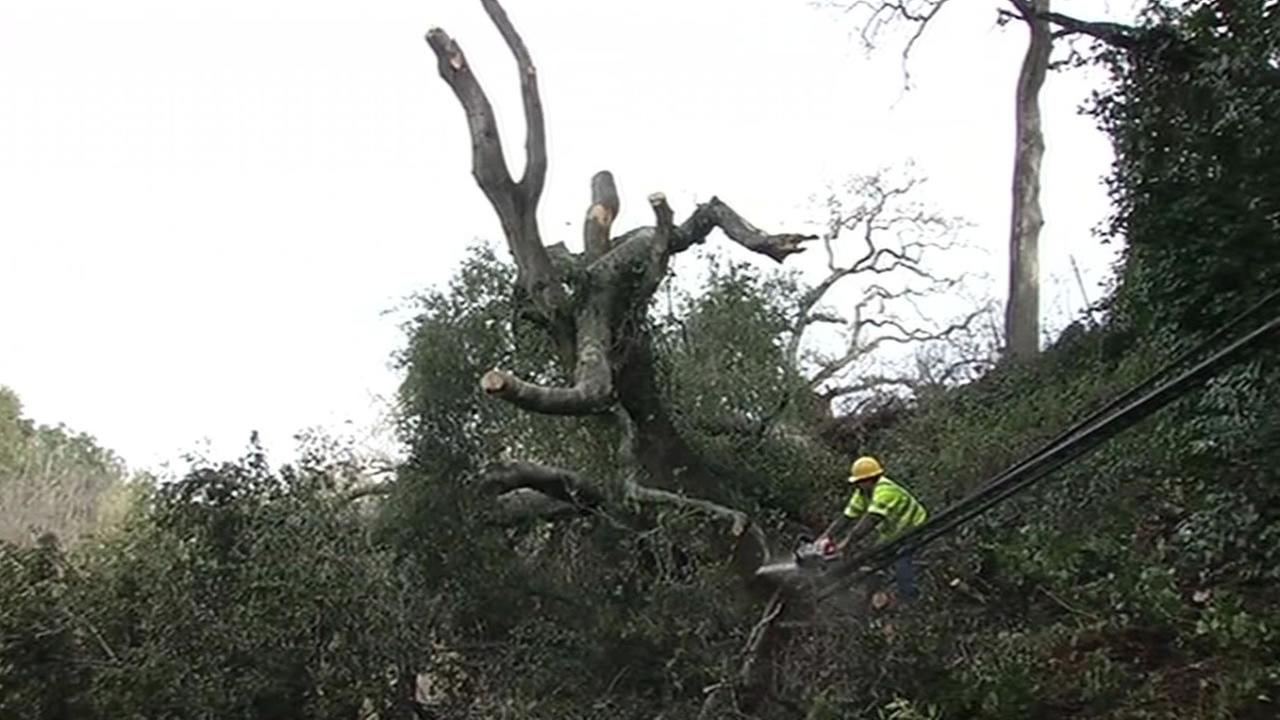 an arborist cuts down a tree