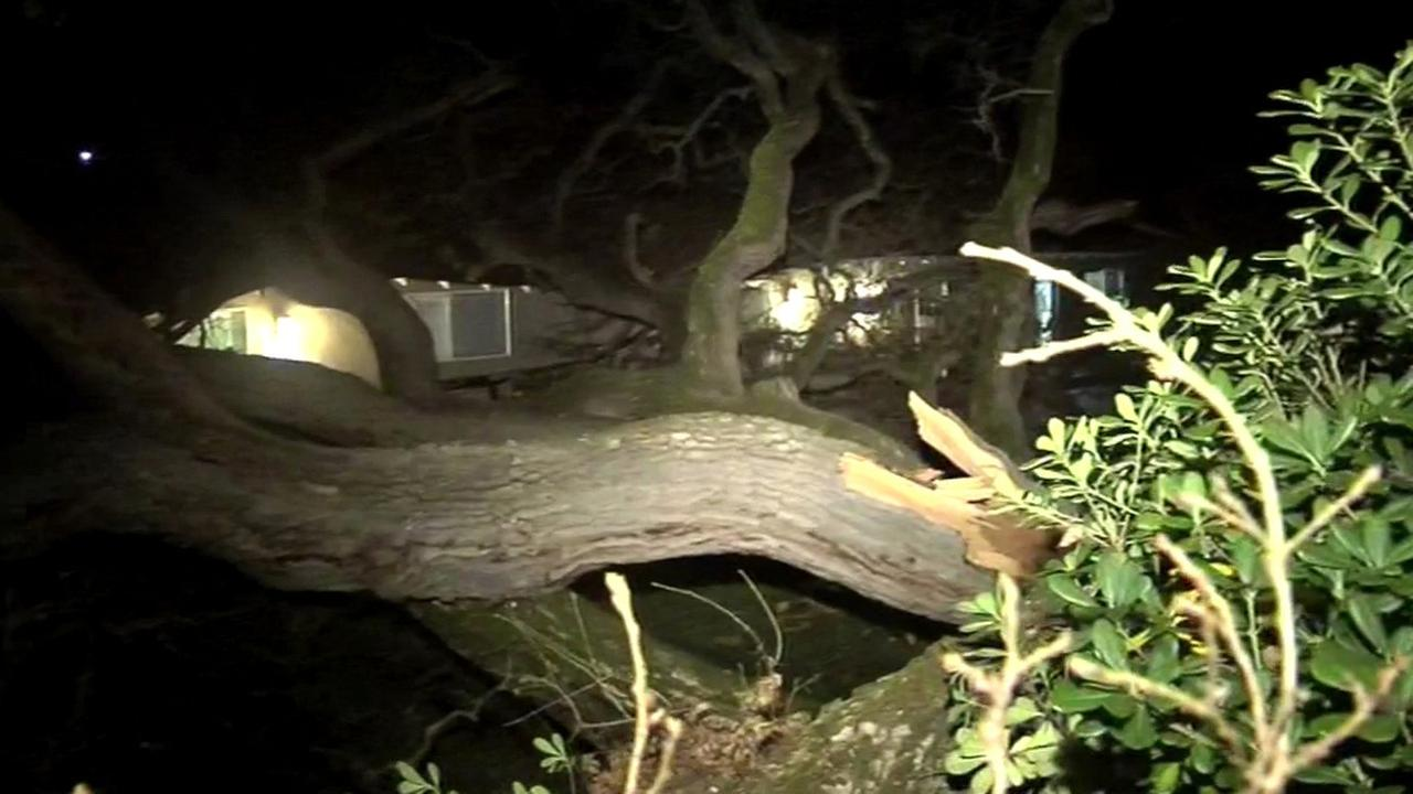 Tree crashes onto home in Walnut Creek, Friday, January 29, 2016.KGO-TV