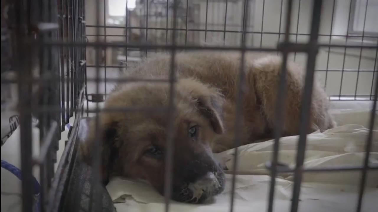 More than 600 animals were rescued from deplorable conditions at a private, no kill shelter in North Carolina.