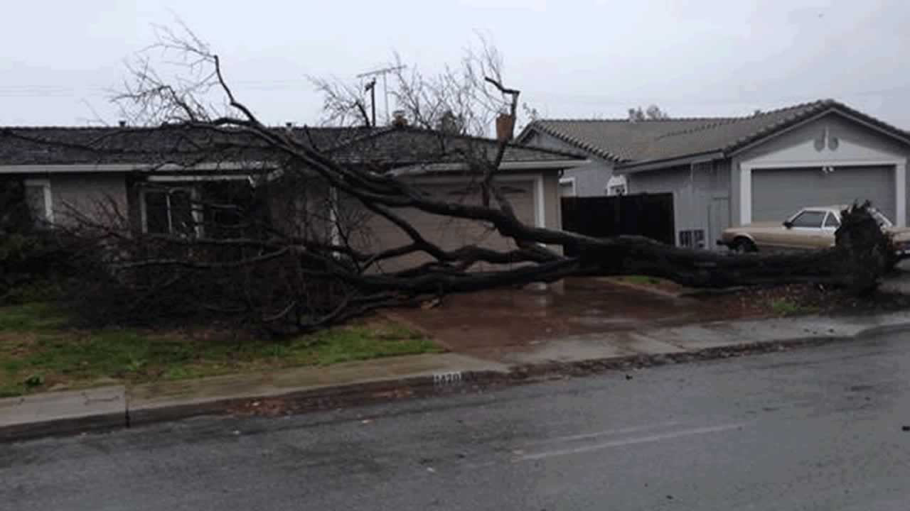 "<div class=""meta image-caption""><div class=""origin-logo origin-image ""><span></span></div><span class=""caption-text"">Tree falls down in front of home during storm on Thursday, December 11, 2014 (Photo submitted by Shaker H. via uReport) (uReport)</span></div>"