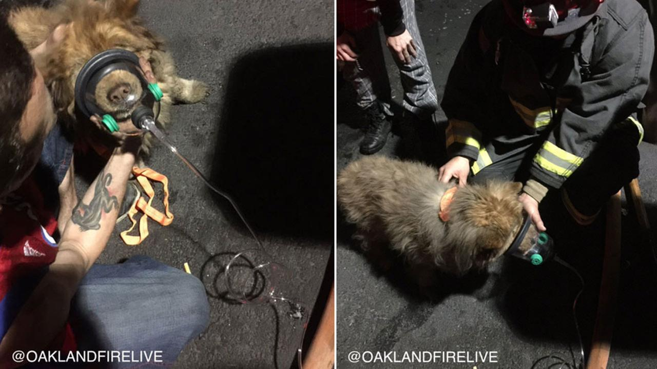 Oakland firefighters used an oxygen mask on a dog that was rescued from a fire on Tuesday, March 1, 2016.