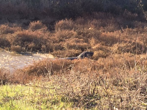 <div class='meta'><div class='origin-logo' data-origin='none'></div><span class='caption-text' data-credit='KGO-TV'>Animal rescuers worked to prevent a persistent elephant seal from crossing a Sonoma County highway on Tuesday, December 29, 2015.</span></div>