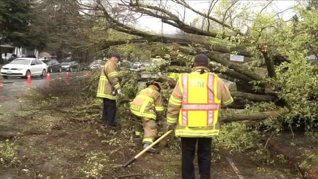 Crew work to clear a tree from the road in Oakland, Calif., on Saturday, March 5, 2016.