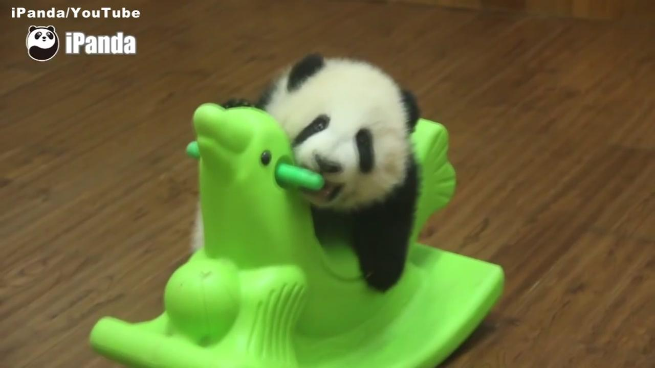 This undated image shows a baby panda riding a rocking horse at the Chengdu Research Base of Giant Panda Breeding in China.