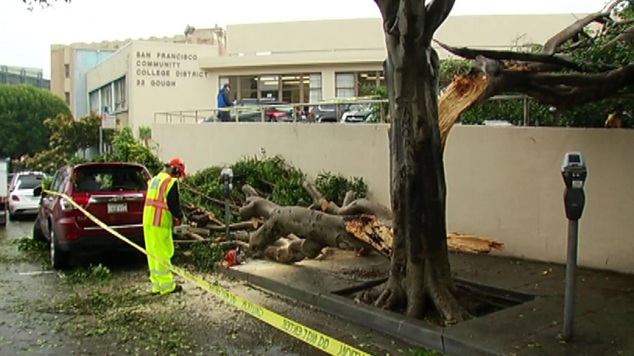 Workers respond after the limb of a ficus tree snapped on Gough Street in San Francisco March 9, 2016.