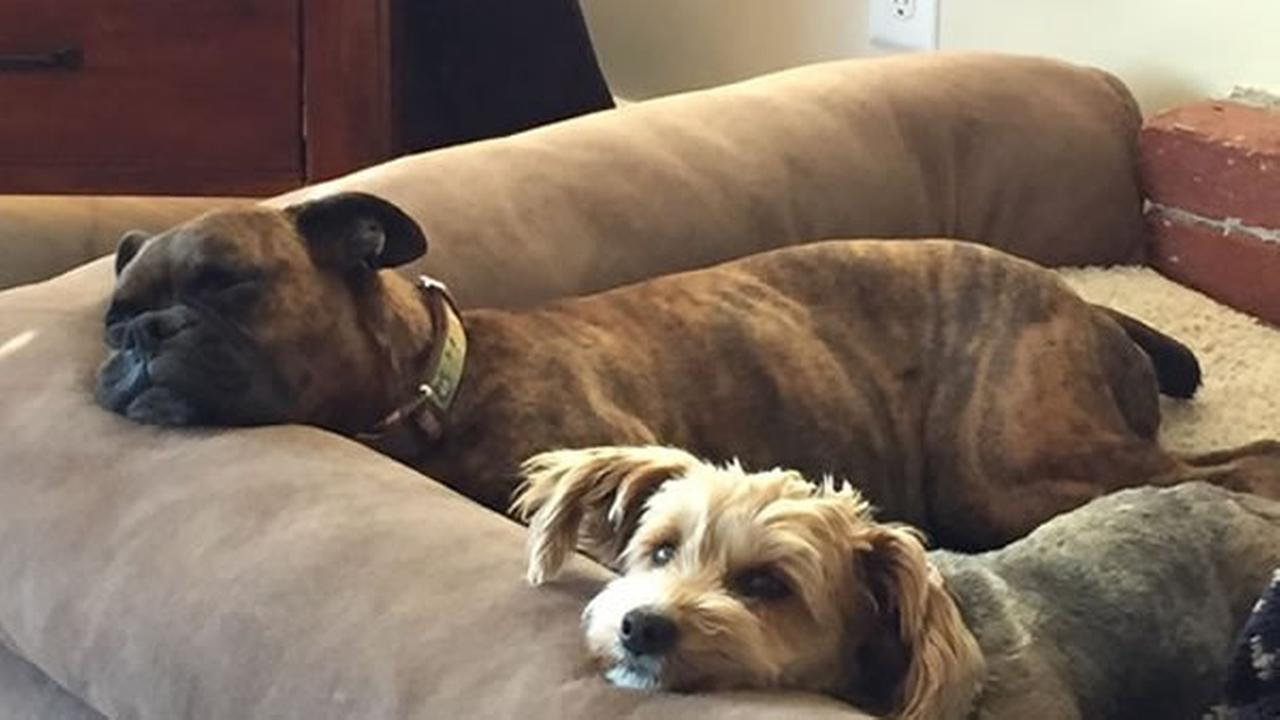 Meet Laila and Scout! In honor of National Puppy Day, ABC7 is getting in the National Puppy Day spirit by featuring photos sent in by our viewers and our news team w/ #PuppiesOn7.Photo submitted to KGO-TV by kidsbaby727/Twitter