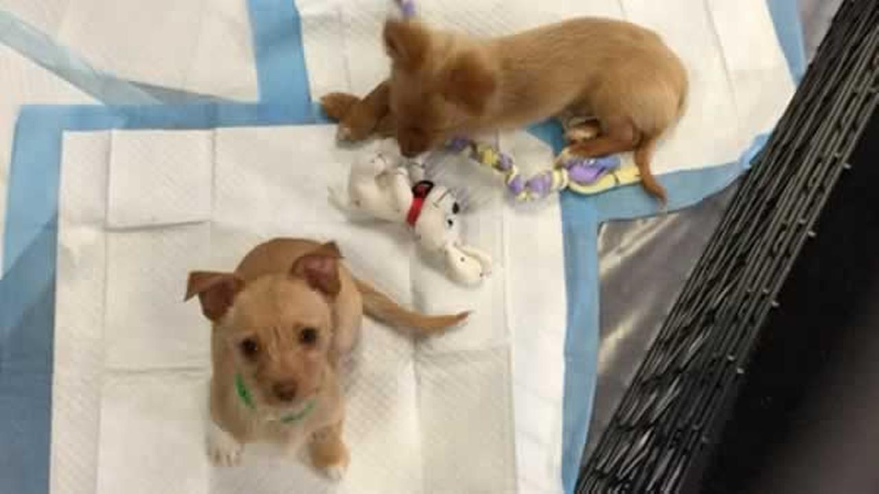 These two little cuties from the Peninsula Humane Society and SPCA are looking for a forever home!KGO-TV