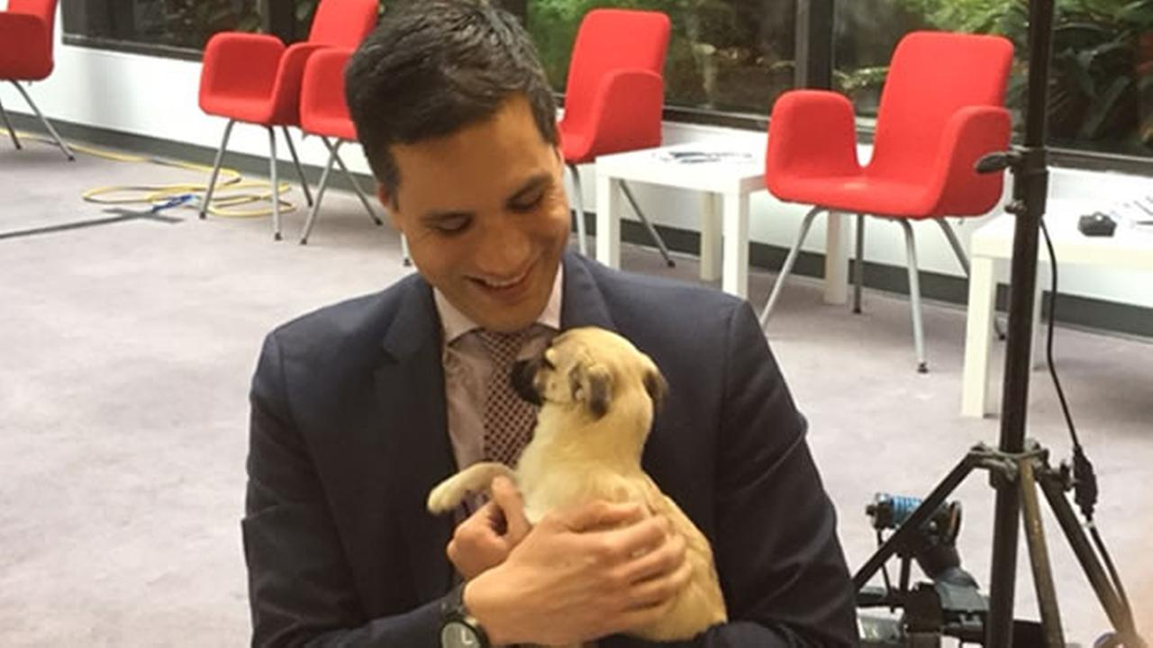 Reggie Aqui found a new friend in this adorable mix named Jesse from Peninsula Humane Society.KGO-TV