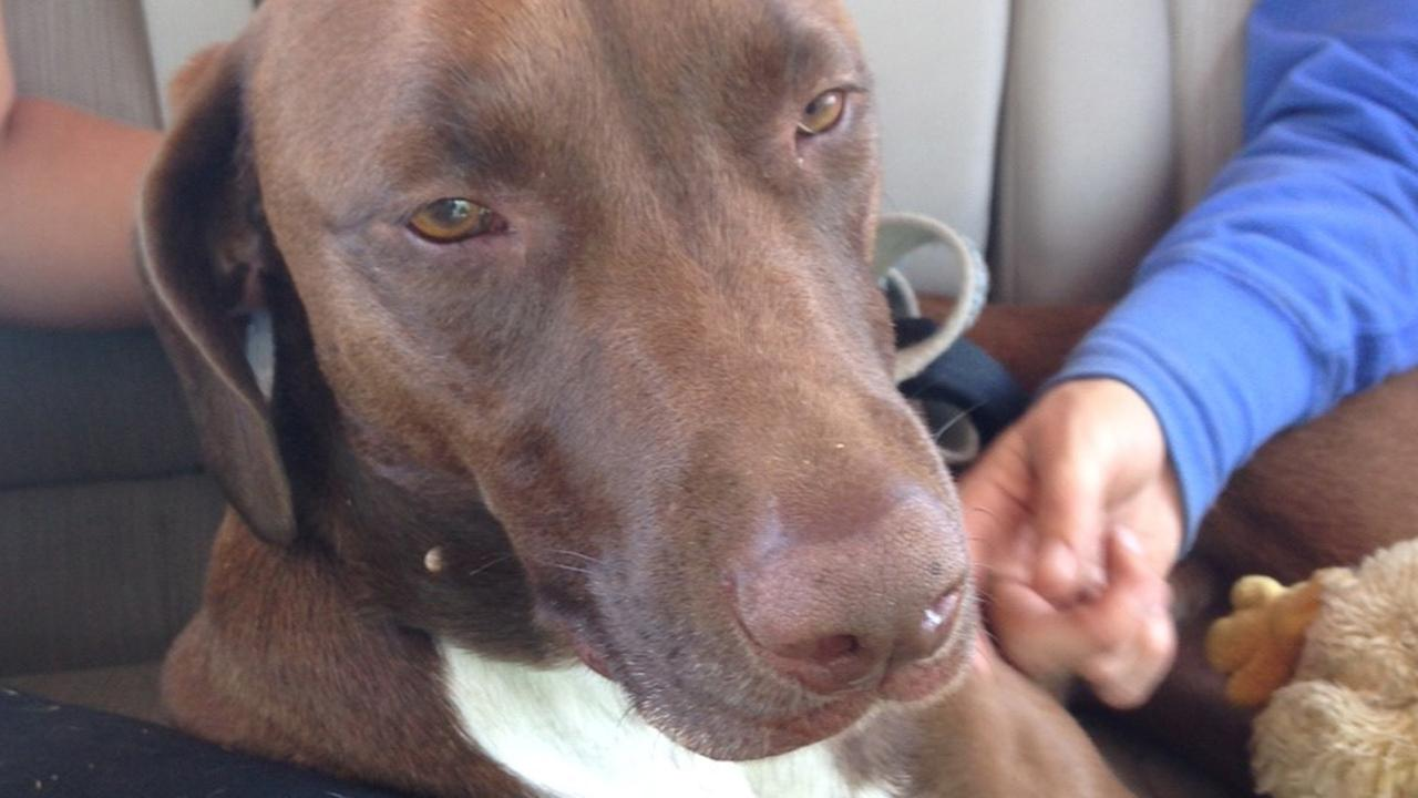 A dog belonging to a California firefighter who disappeared during a backpacking trip was found Sunday after nine days in the wilderness, but his owner remains missing.