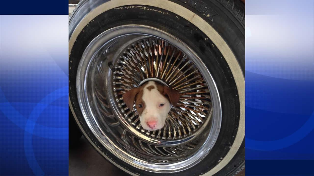 Firefighters in Bakersfield help free a puppy stuck in a wheel rim.