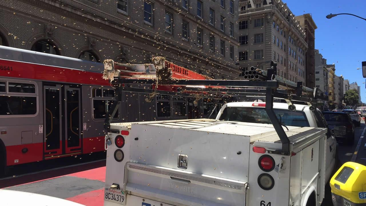 Thousands of bees swarmed a truck on Geary Street in San Francisco, Calif. on Thursday, July 21, 2016.Photo submitted to KGO-TV by Theron Kabrich from San Francisco Art Exchange LLC