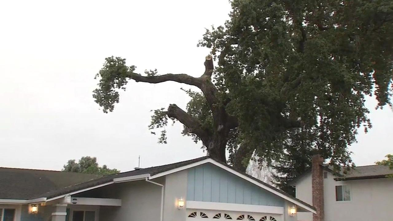 Massive tree branches fall on homes in San Jose, California, Monday, August 1, 2016.