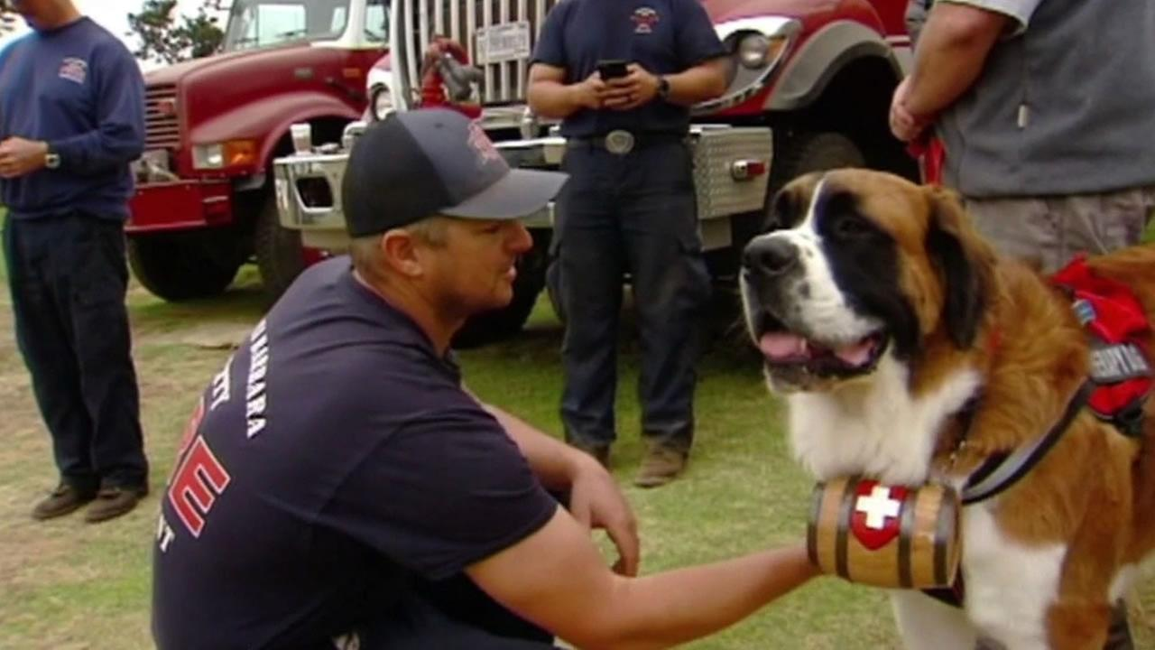 This image shows therapy dogs were gave comfort to firefighters battling the Soberanes Fire in Monterey County on August 5, 2016.