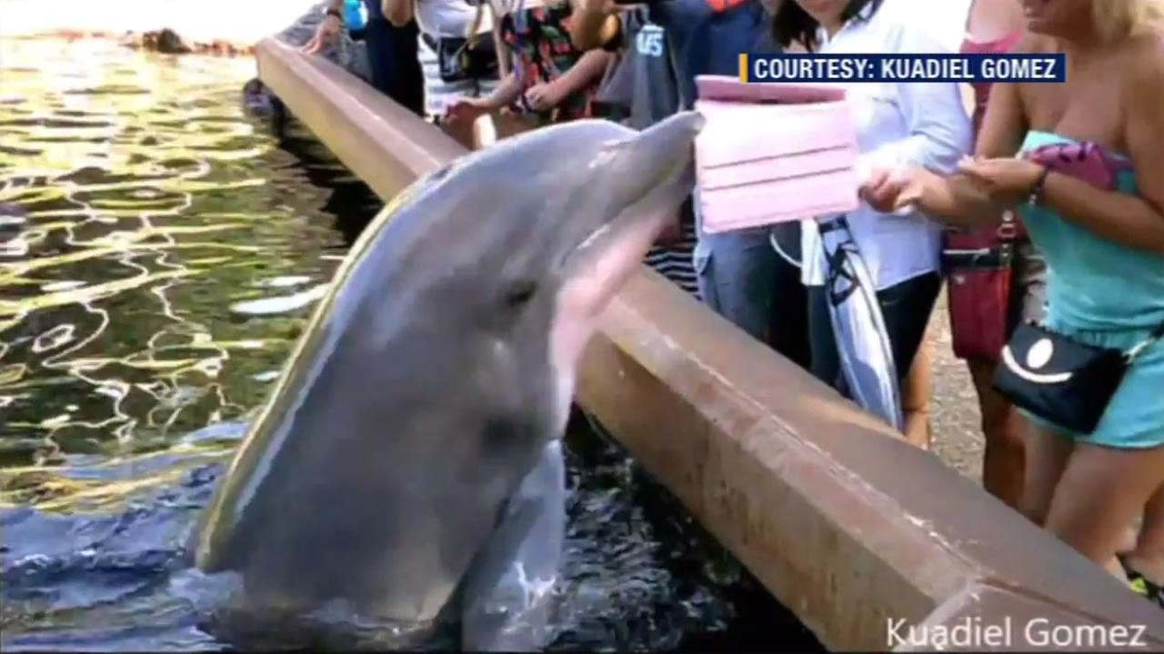 Video captures the moment when a dolphin swiped a tourists iPad at SeaWorld Orlando.
