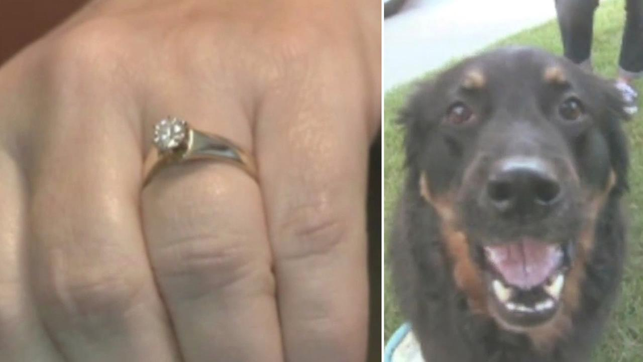 A Wisconsin woman found a special surprise in an unlikely place after her dog coughed up her wedding ring lost five years ago.