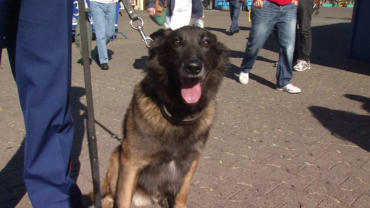 This image shows the K9 Officer Pascal, who is set to retire, on his visit to  Pier 39 in San Francisco on Oct. 5, 2016.