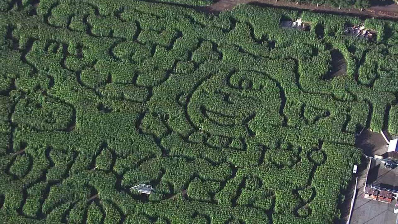 This undated image shows the Peanuts corn maze in Livermore, Calif.