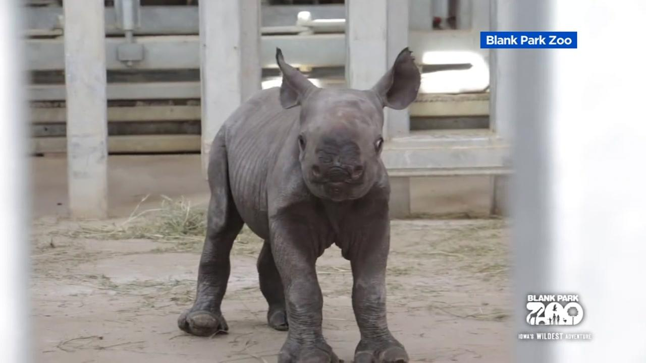 A baby rhino was born at a zoo in Des Moines.