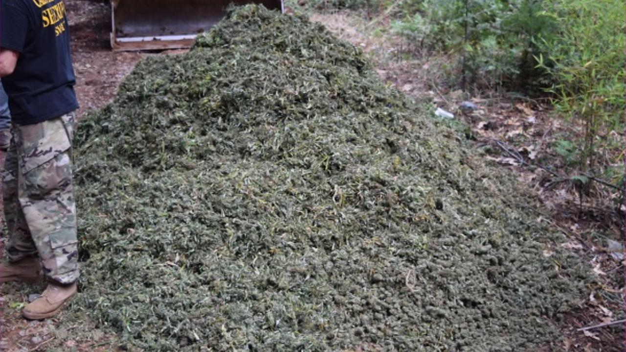 This image shows some of the marijuana confiscated by Calaveras County Sheriffs deputies from illegal pot grows on Oct. 25, 2016.