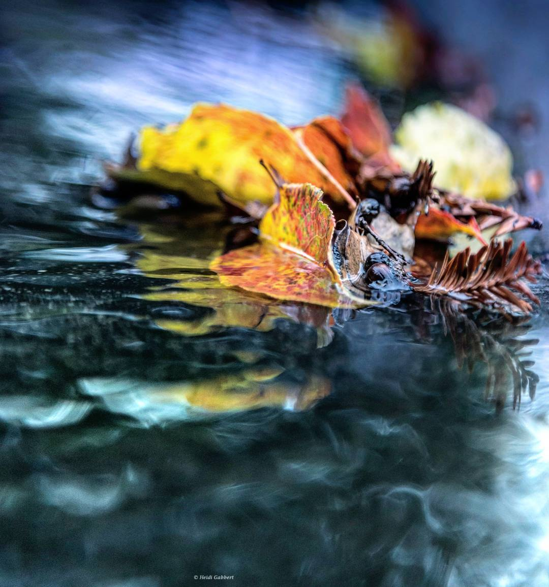 <div class='meta'><div class='origin-logo' data-origin='none'></div><span class='caption-text' data-credit='heidisec/Instagram'>A leaf is seen floating in a puddle on Jan. 7, 2017.</span></div>