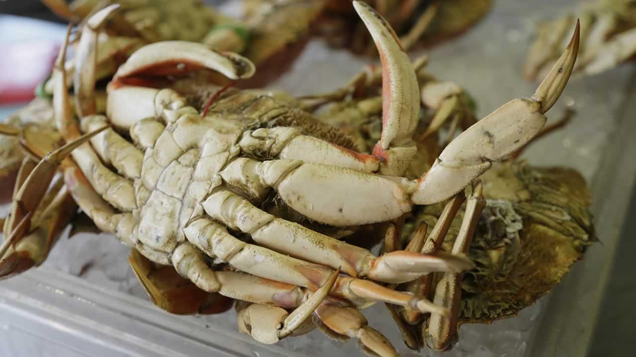 In this photo taken Tuesday, Dec. 8, 2015, a Dungeness crab is seen for sale at Fishermans Wharf in San Francisco.