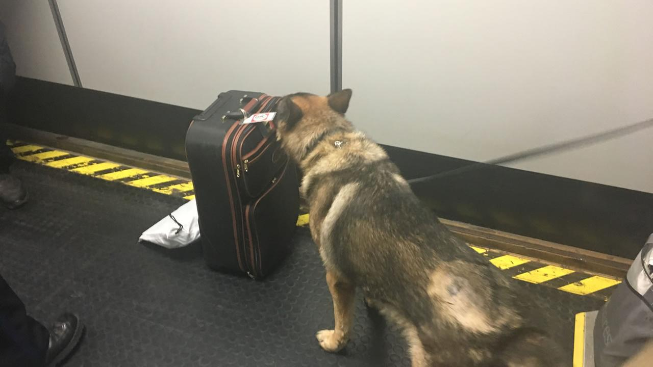 This image shows a dog sniffing luggage at the Oakland International Airport on Nov. 22, 2016.