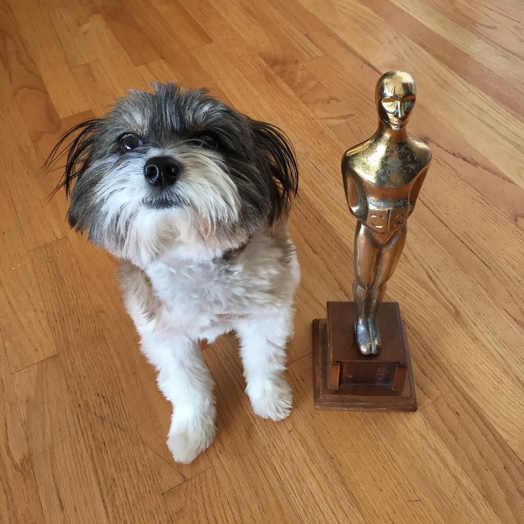 <div class='meta'><div class='origin-logo' data-origin='none'></div><span class='caption-text' data-credit='Photo submitted to KGO-TV by @wilson_in_the_city/Instagram'>Wilson the dog celebrates the Oscars in this undated image.</span></div>
