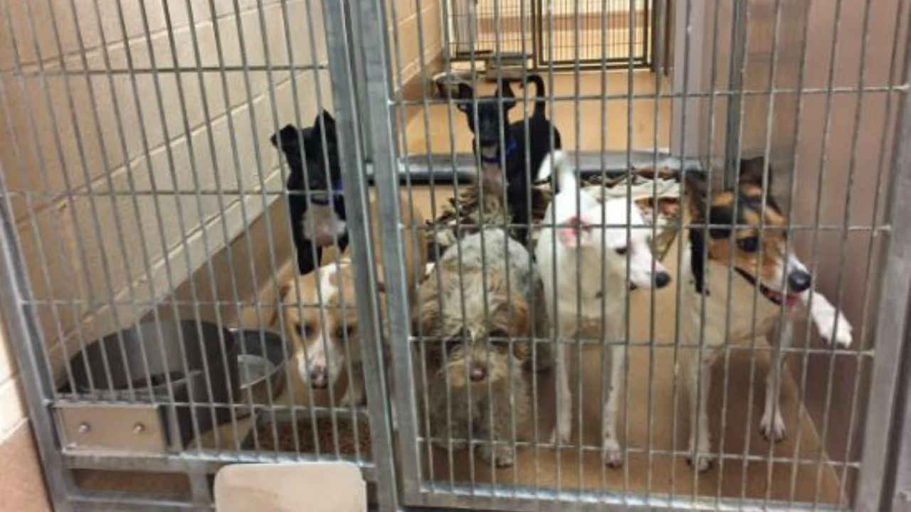 dogs waiting to be adopted are seen in a Contra Costa County Animal Services enclosure on Wednesday, Jan. 4, 2017.