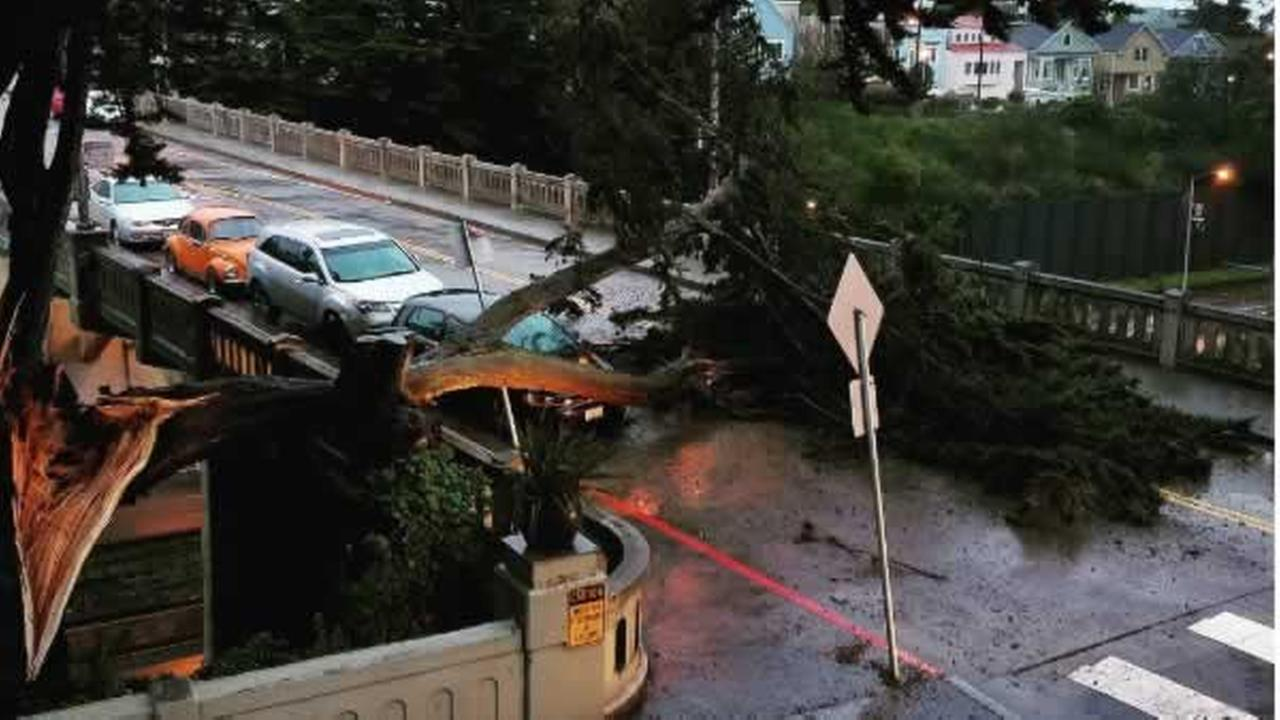 An old cypress tree narrowly missed falling on a car during the storm on Sunday, January 8, 2017 in San Francisco.Photo submitted to KGO-TV by carriedawaysf/Instagram
