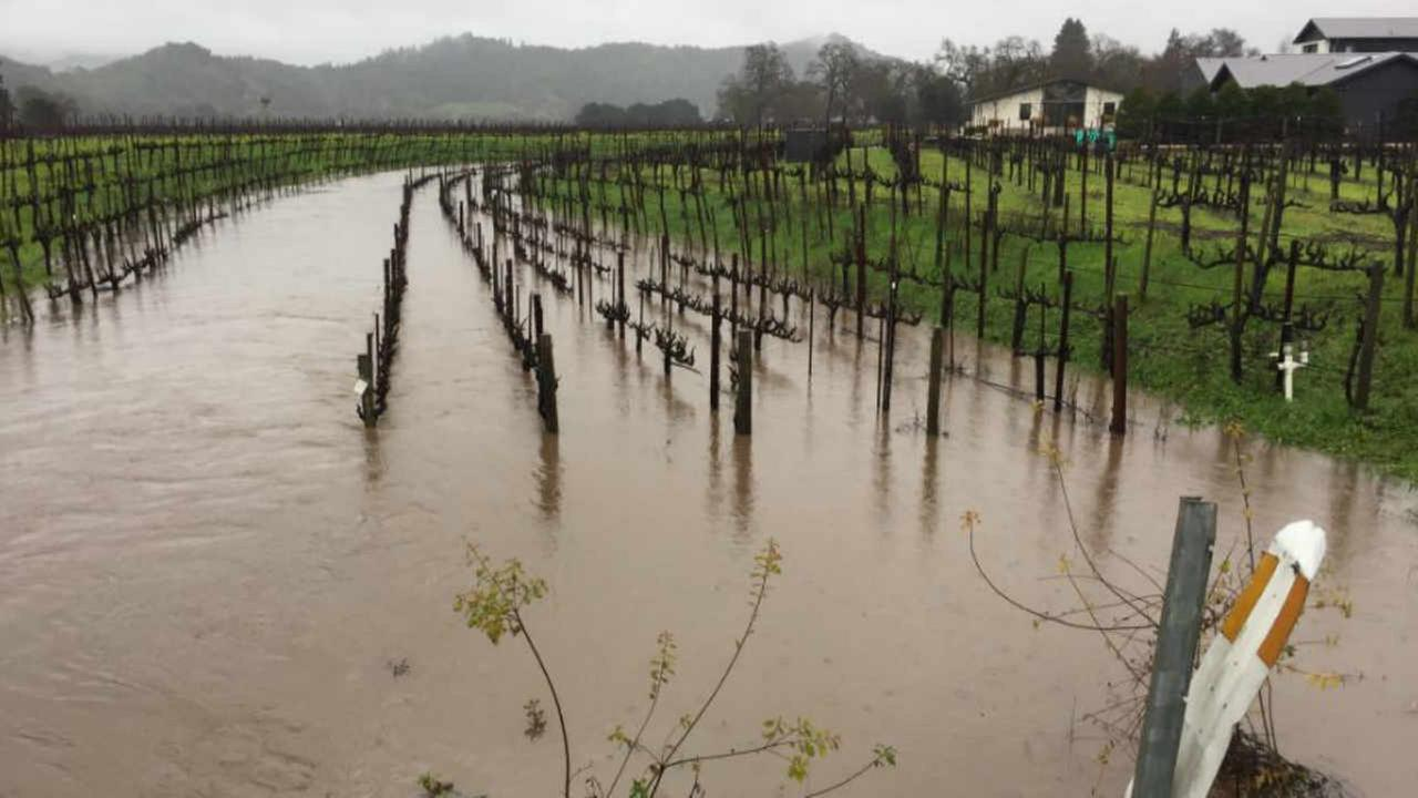 A flooded vineyard is seen in Yountville on Sunday Jan. 8, 2017.KGO-TV