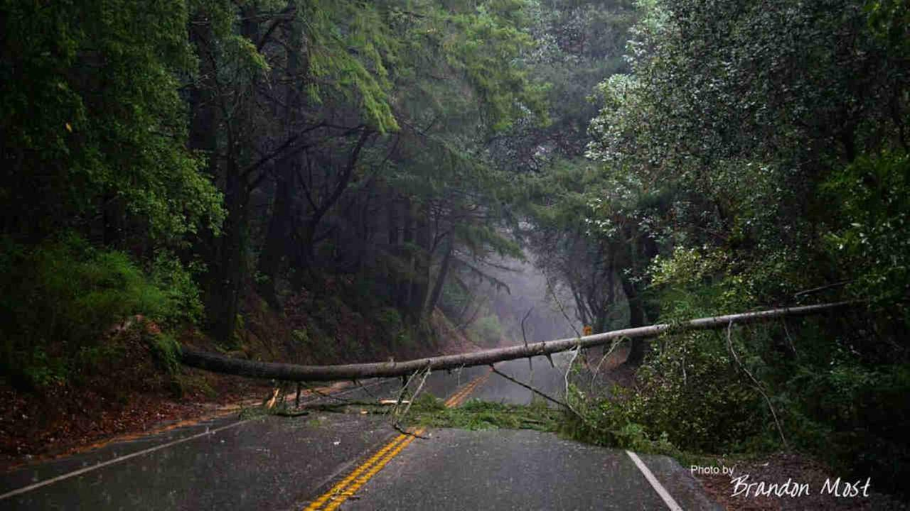A downed tree is seen in the Santa Cruz Mountains, Calif. on Sunday January 8, 2017.(Photo submitted to KGO-TV by Brandon_Most/Instagram)