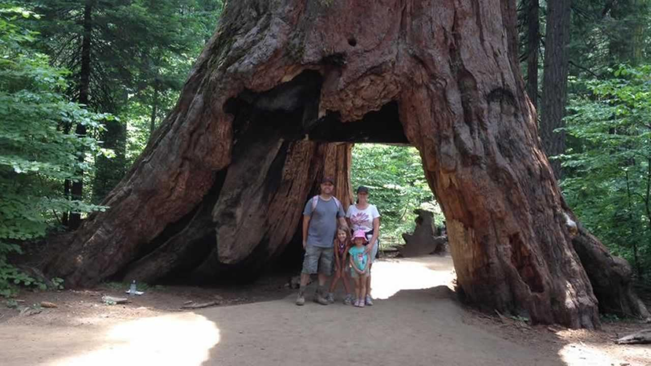 ABC7 viewers shared photos of their visit to the Calaveras, Calif. tunnel tree. The iconic tree toppled over during a massive storm in the Bay Area on Sunday, January 8, 2017.Photo submitted to KGO-TV by Noelle Peterson-Thill/Facebook