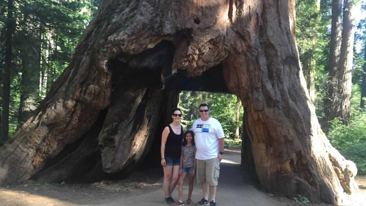 ABC7 viewers shared photos of their visit to the Calaveras, Calif. tunnel tree. The iconic tree toppled over during a massive storm in the Bay Area on Sunday, January 8, 2017.Photo submitted to KGO-TV by Lindsey Perry-Mello/Facebook