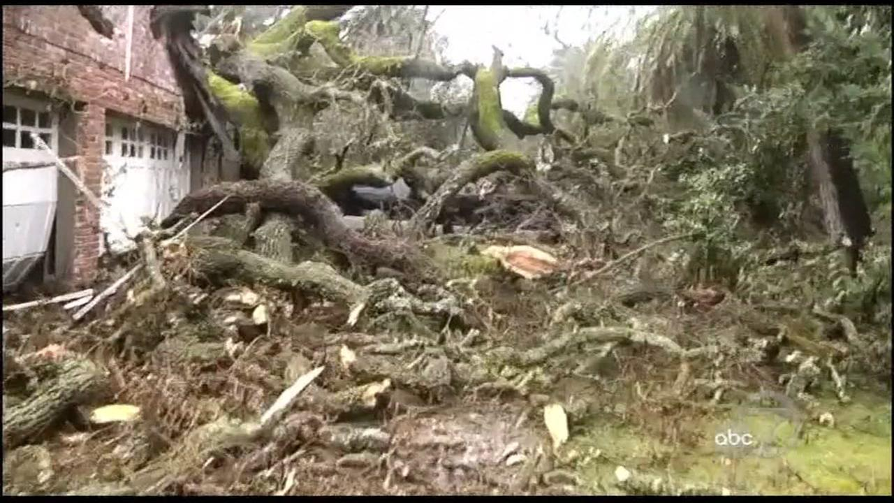 A heritage oak tree fell on a Danville home on Jan. 10, 2017. during a Bay Area storm.