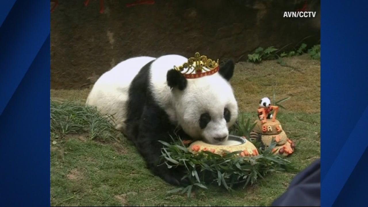 A birthday party was held in China for Basi, the worlds oldest panda in captivity, on Wednesday, January 18, 2017.