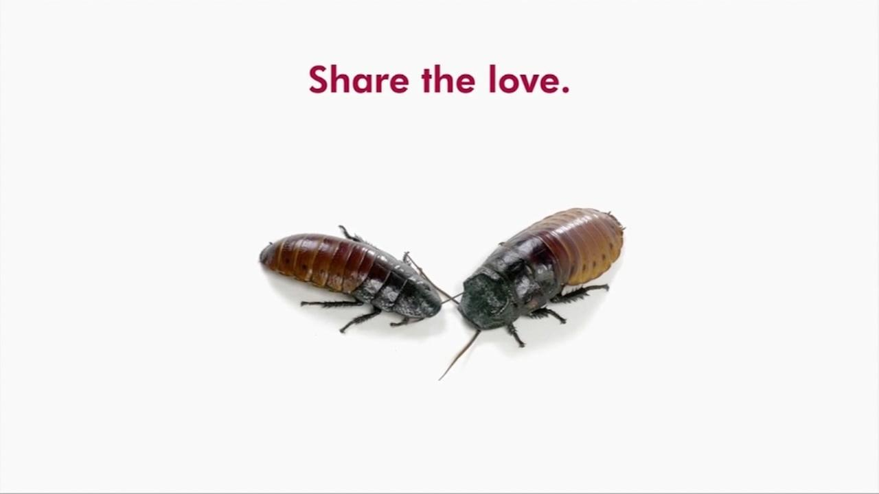 Show your love by naming a roach after your significant other