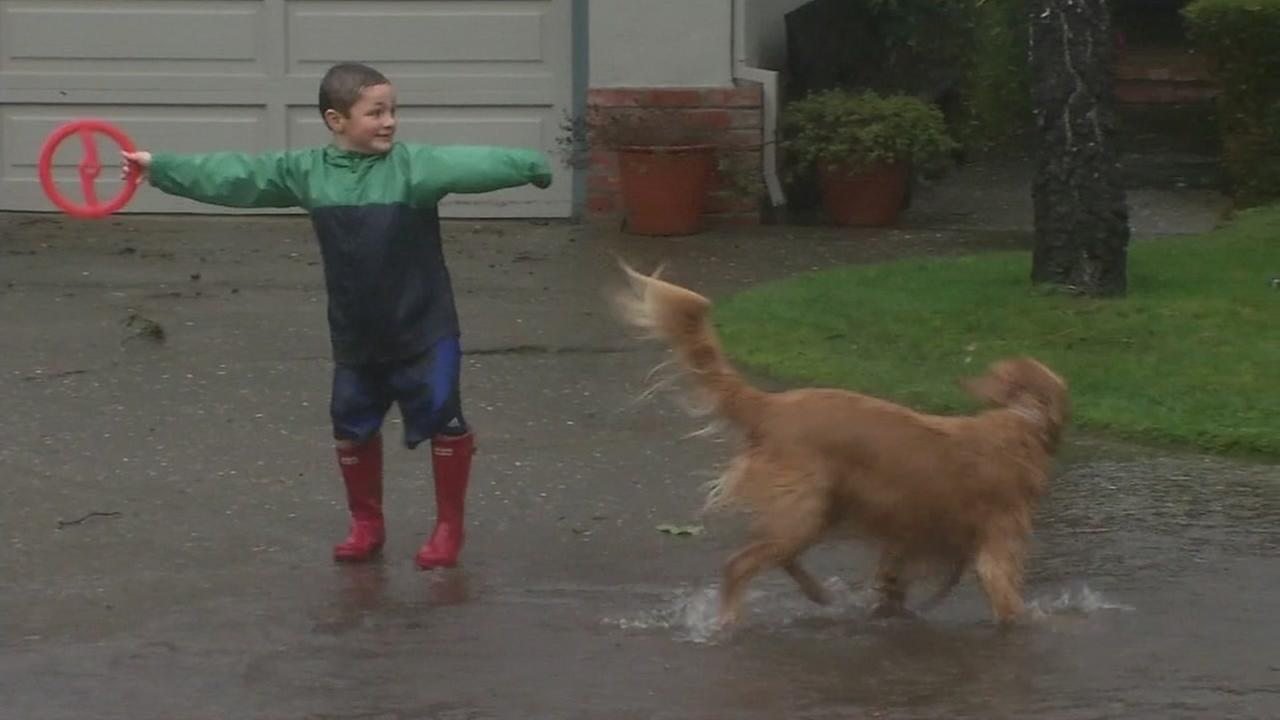 A boy and his dog play in floodwaters in Marin County, Calif. on Feb. 9, 2017.KGO-TV