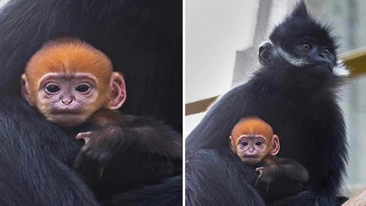 The internet is swooning over this Instagram picture shared on Thursday by the San Francisco Zoo.
