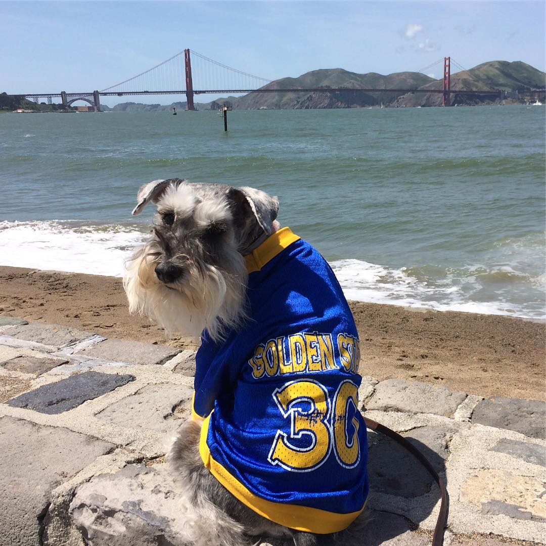 <div class='meta'><div class='origin-logo' data-origin='none'></div><span class='caption-text' data-credit='gandalf.the.minischnauzer/Instagram'>Golden State Warriors fans are showing their spirit by tagging their photos #DubsOn7.</span></div>