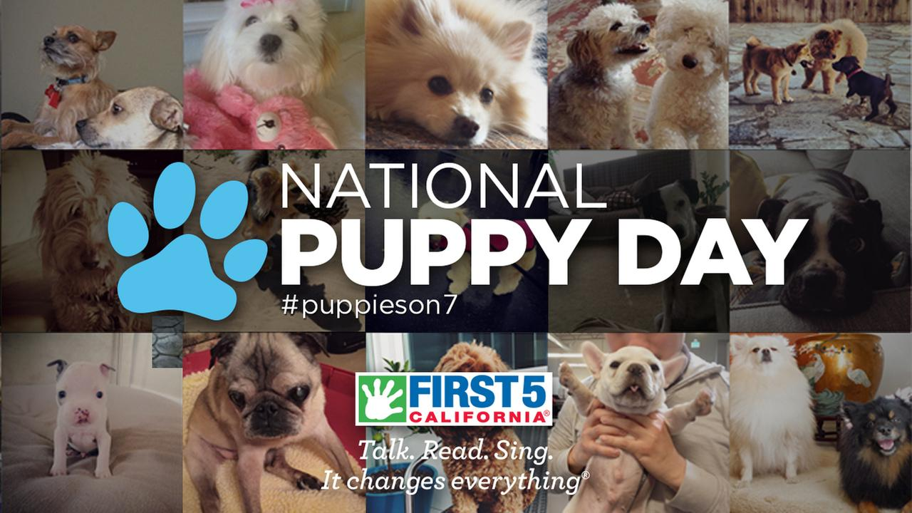 ABC7 adoption event for National Puppy Day 2017