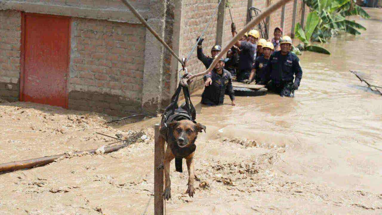 A dog is rescued by crews in Lima, Peru in this undated image.
