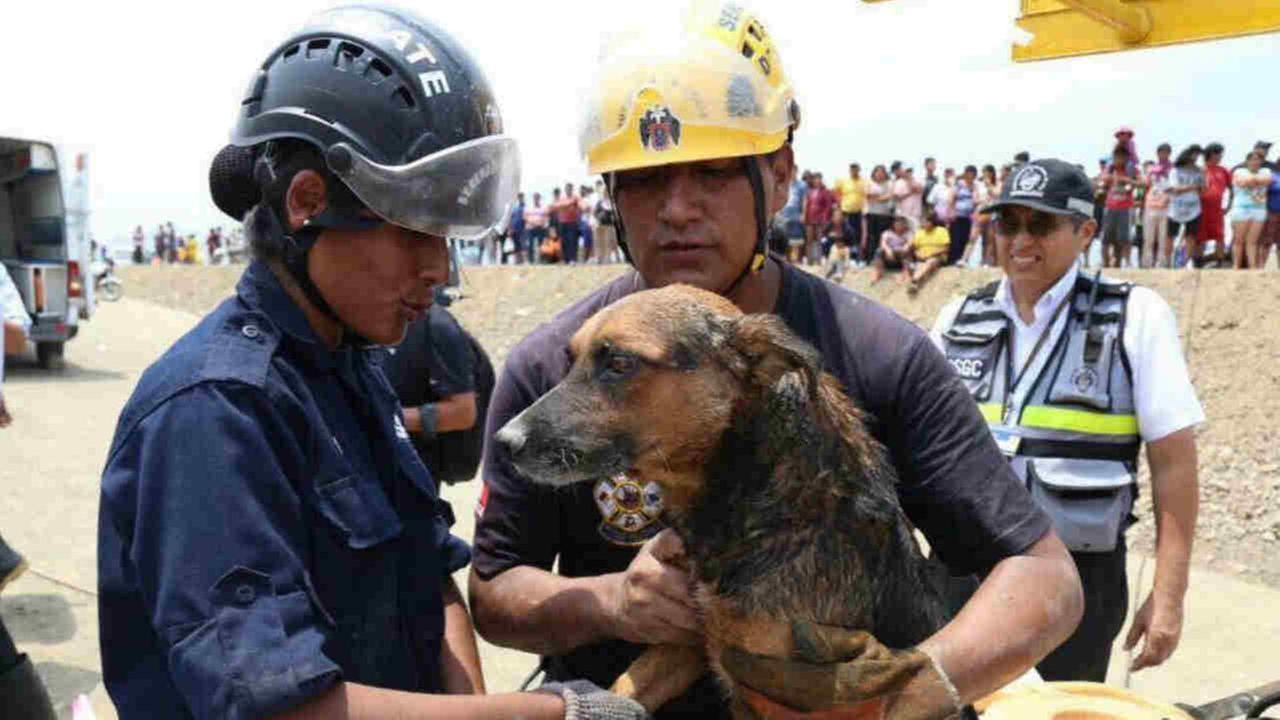 People and pets had to be rescued from flooding in and around Lima, Peru.Municipalidad de Lima