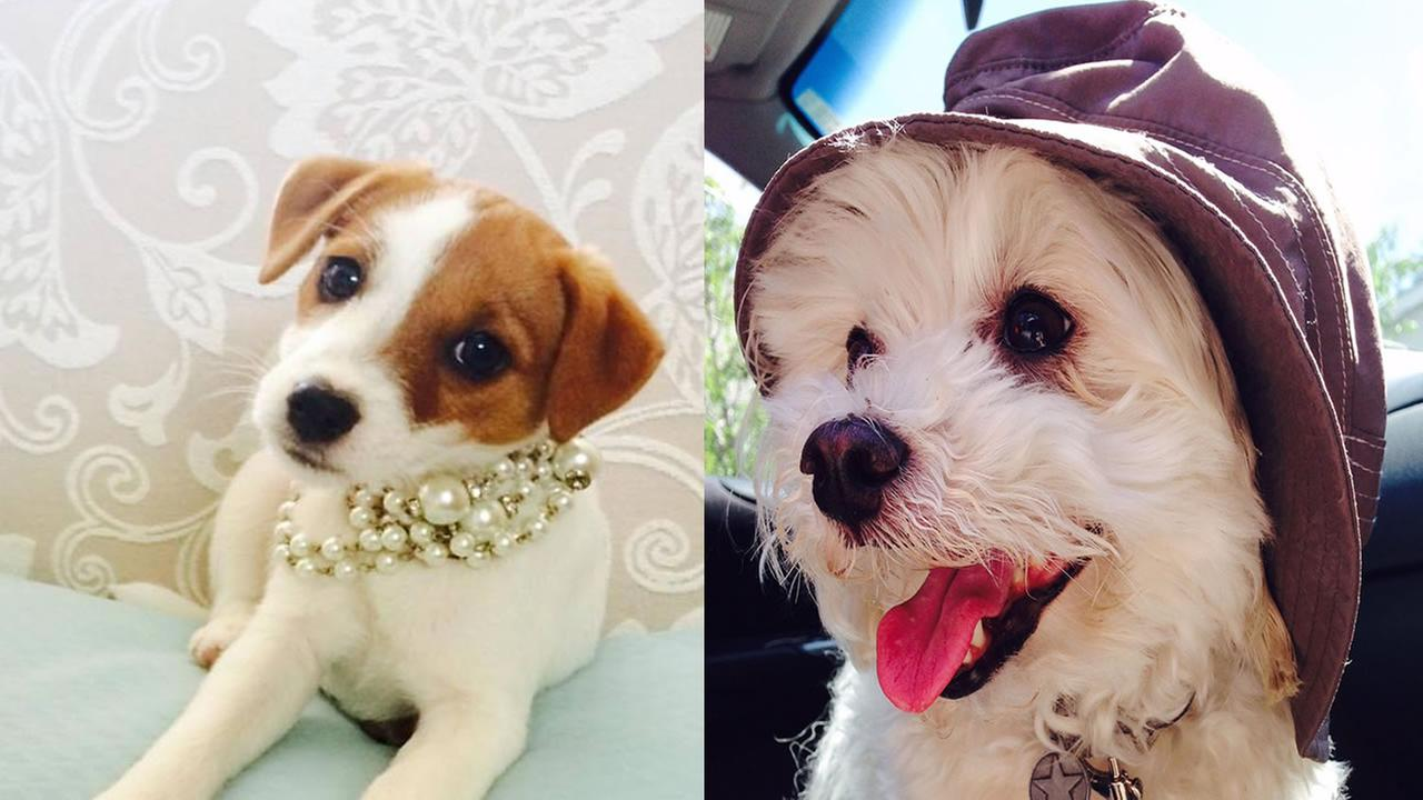 Viewers are tagging their photos #PuppiesOn7 in celebration of National Puppy Day.