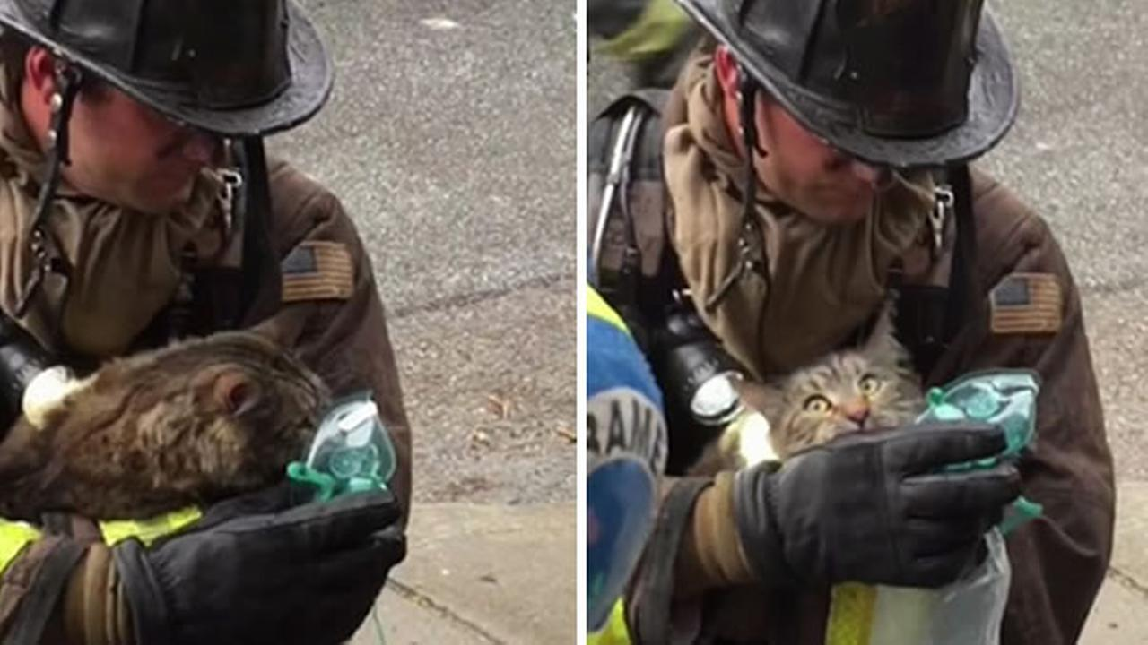 A cat receives oxygen after being rescued from a fire in San Franciscos Glen Park neighborhood on Thursday, April 6, 2017.