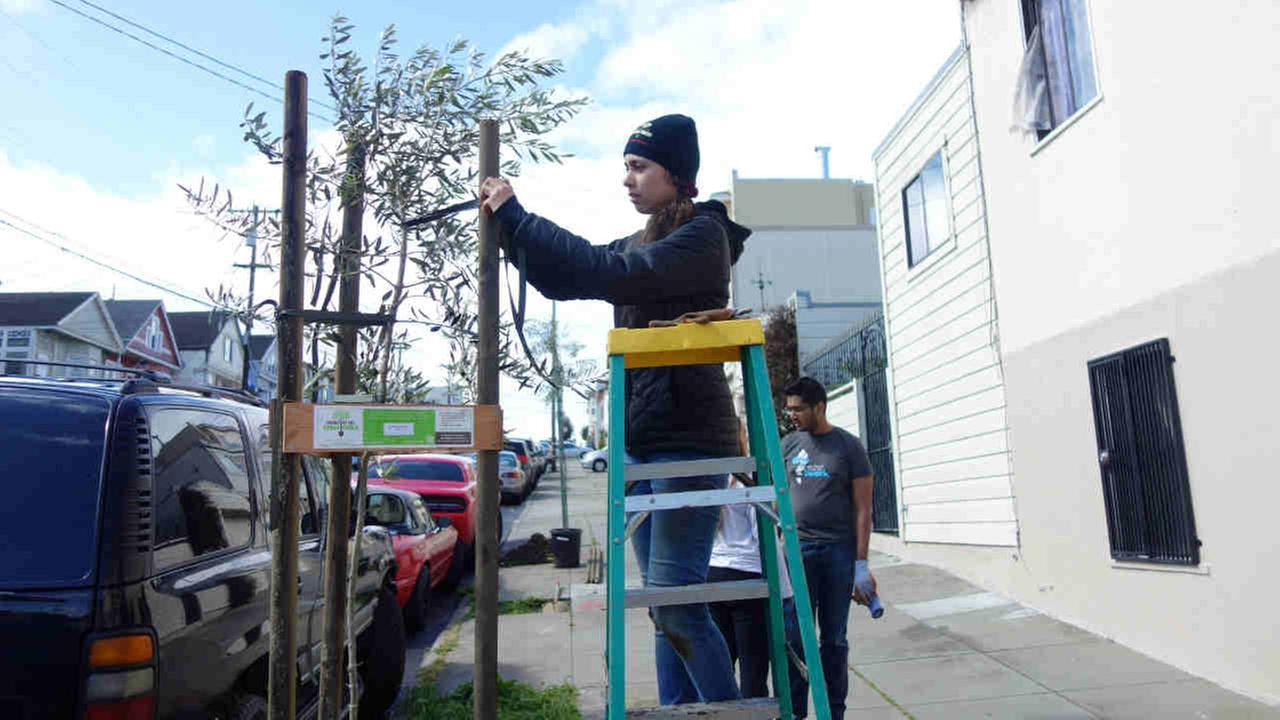 A volunteer plants a tree in San Francisco on Saturday April 8, 2017.