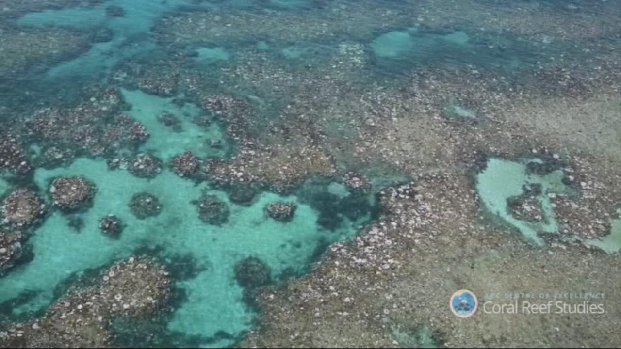 An aerial survey shows two-thirds of Australias Great Barrier Reef has been damaged by coral bleaching.