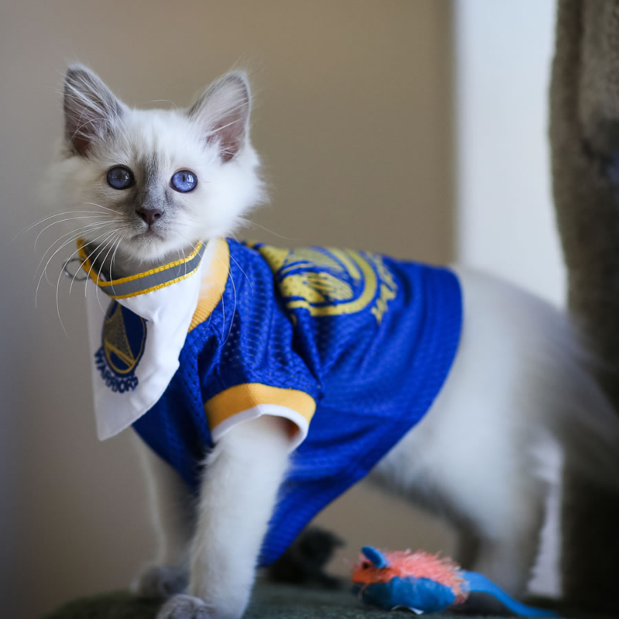 <div class='meta'><div class='origin-logo' data-origin='none'></div><span class='caption-text' data-credit='Jim Rael/Instagram'>A cat is seen wearing a Golden State Warriors jersey in this undated image.</span></div>