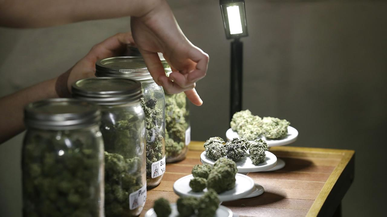 A vendor shows the variety of medical marijuana for sale in Seattle, Feb.13.2013.