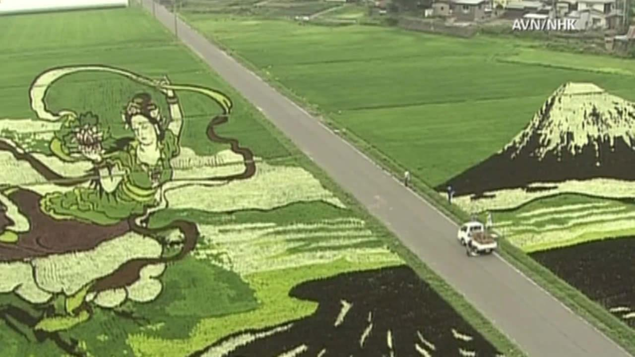 Japanese artists have turned a rice field into vibrant, natural art to honor Mount Fuji.